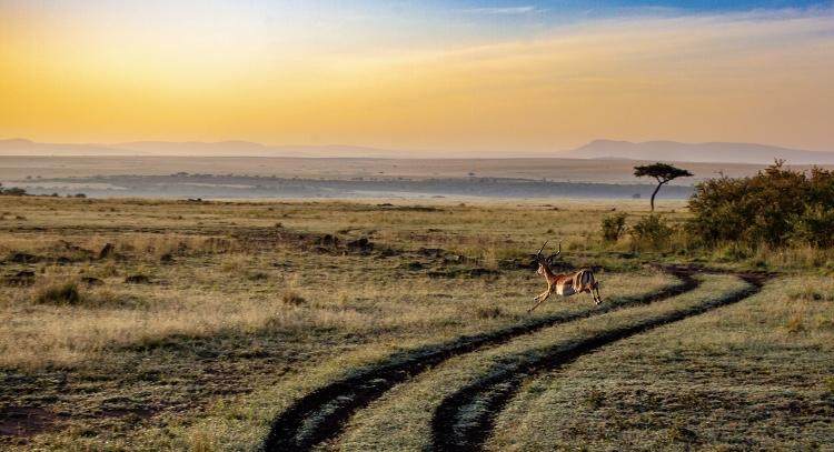アフリカの日没