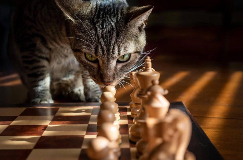 猫とチェス