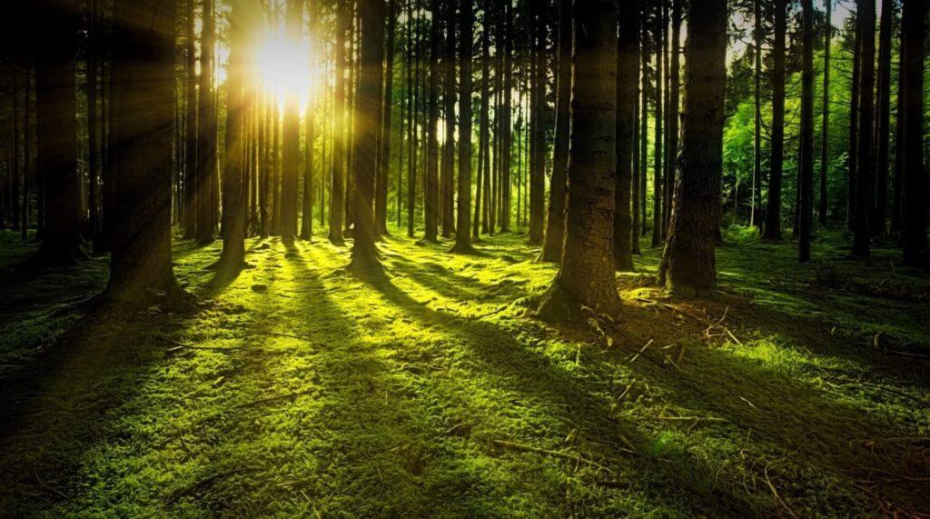 森林 太陽