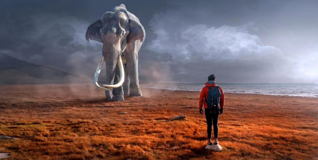 象と対峙する男