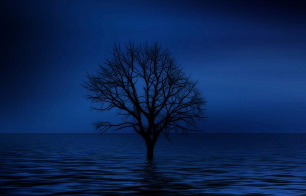 暗闇に佇む木
